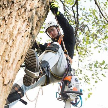 Downers Grove Tree Service's avatar