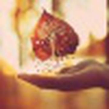 Rosa Morrone's avatar
