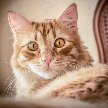 Funny Cats Videos's avatar