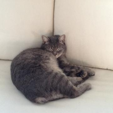 Chiyoko Tada's avatar