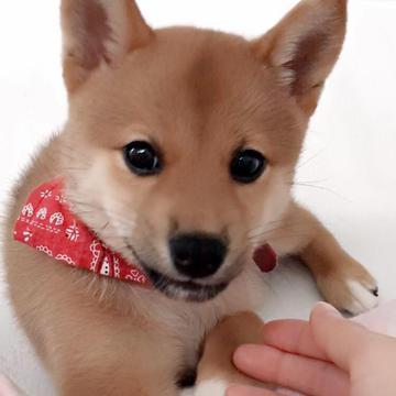 Emi Atarashi's avatar