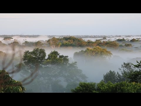 Science Today: Weighing the Rainforest | California Academy of Sciences thumbnail