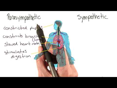 Parasympathetic and sympathetic physiology - Intro to Psychology thumbnail