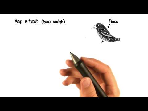 06-25 Finches thumbnail