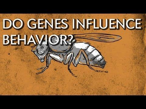 How Do Genes Influence Behavior? - Instant Egghead #18 thumbnail