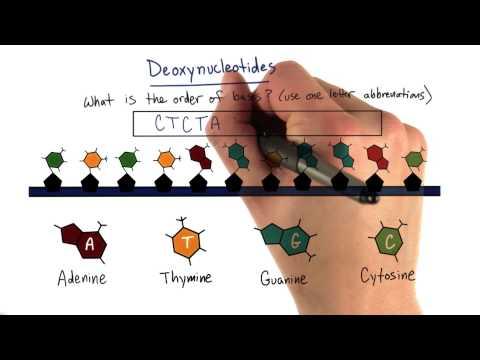 Nitrogenous Base thumbnail