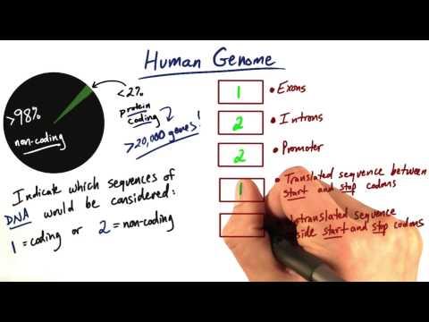 Coding vs Non coding thumbnail
