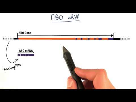 ABO mRNA thumbnail