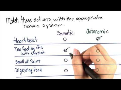 Somatic or autonomic thumbnail