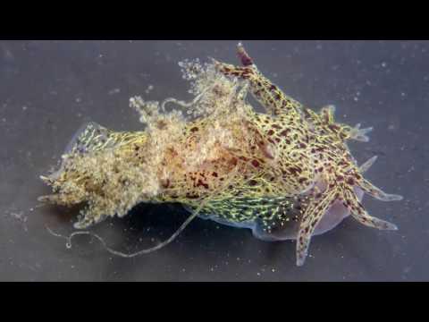 Science Today: Sea Slug Discovery | California Academy of Sciences thumbnail