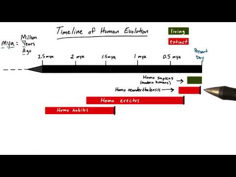 Timeline of humans thumbnail
