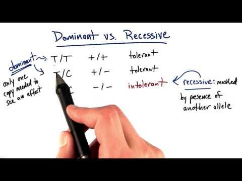 Dominant vs Recessive thumbnail