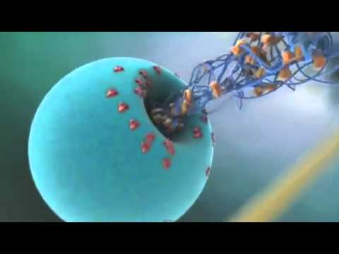 Science in Action: Deadly Dengue Virus | California Academy of Sciences thumbnail