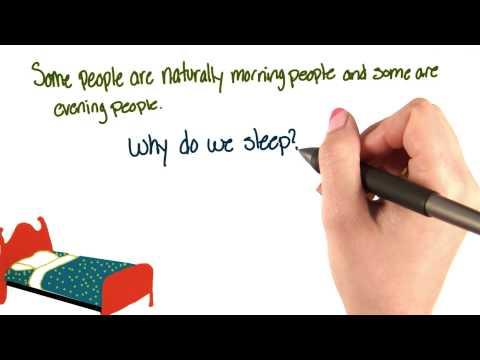 Why do we sleep thumbnail