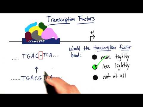Transcription Factors thumbnail