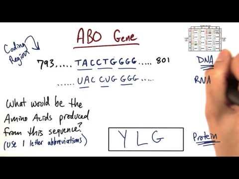 ABO Gene thumbnail