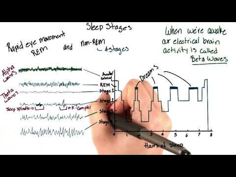 Brain waves during sleep thumbnail