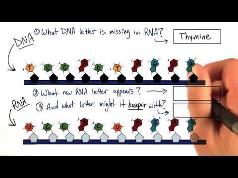 RNA thumbnail