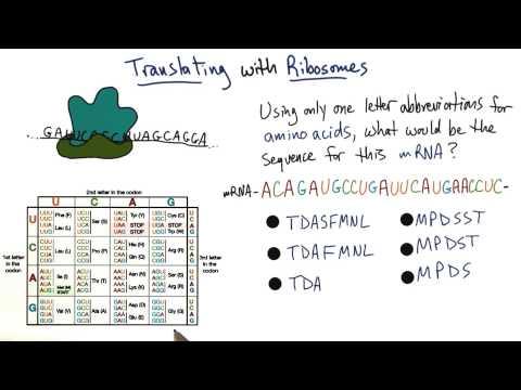 Ribosomes thumbnail