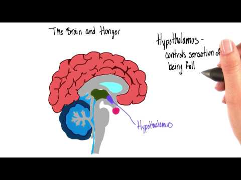 Brain and hunger - Intro to Psychology thumbnail