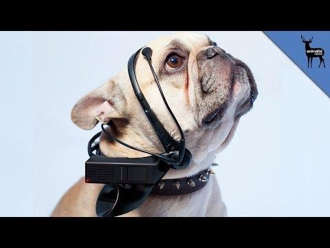 Dog Translator of The Future thumbnail