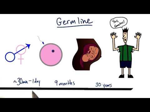 Germline thumbnail