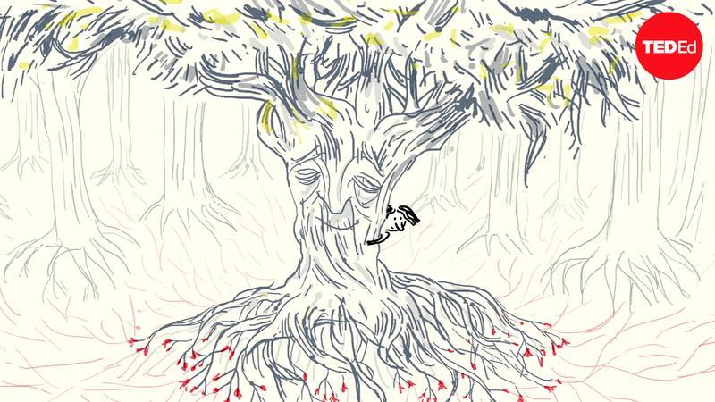 The secret language of trees thumbnail