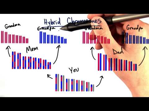 Hybrid Chromosomes thumbnail