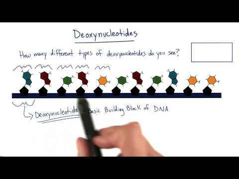 Nucleotides thumbnail