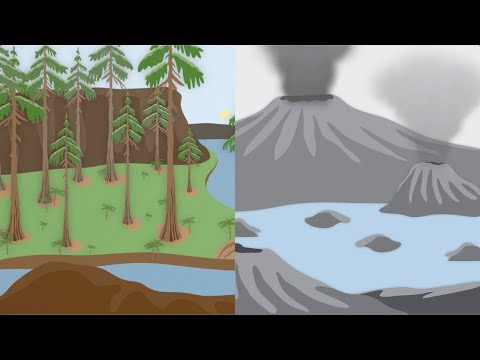 How did plants change our planet? | California Academy of Sciences thumbnail