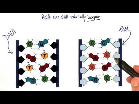 RNA Basepairs thumbnail
