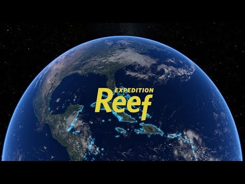 Expedition Reef for Educators | California Academy of Sciences thumbnail