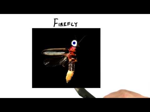 Firefly - Interactive 3D Graphics thumbnail