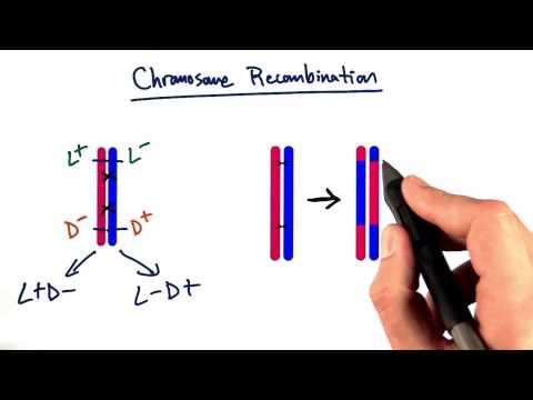 Recombination thumbnail