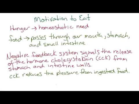 Motivation to eat - Intro to Psychology thumbnail
