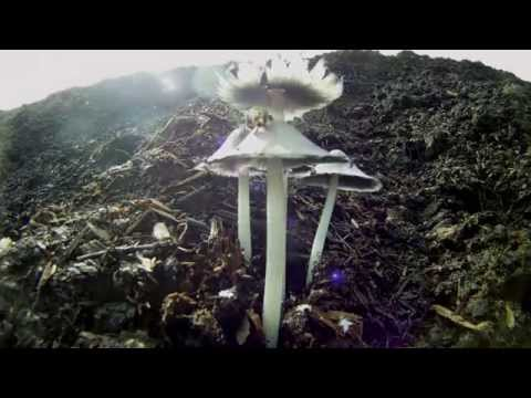 Science Today: Friendly Fungus | California Academy of Sciences thumbnail
