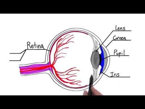 Parts of the eye thumbnail