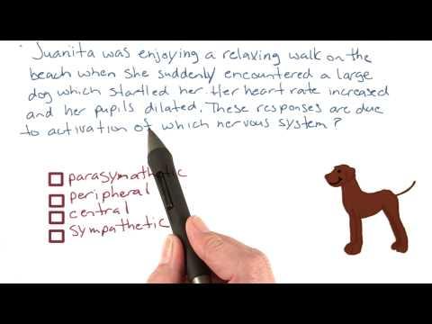 Startling dog thumbnail