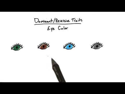 Πολυπλοκότητα της Κυριαρχίας - Εισαγωγή στην Ψυχολογία thumbnail