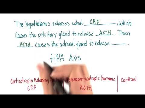 Steps of HPA axis - Intro to Psychology thumbnail