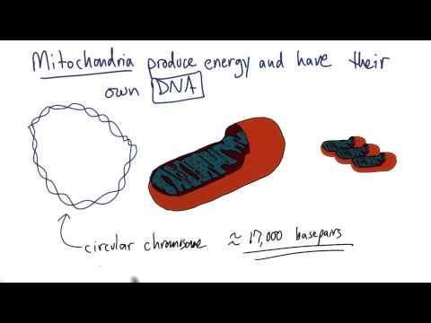Mitochondria thumbnail