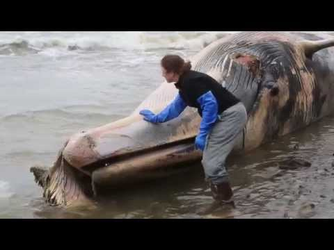 Science Today: Whale Strandings | California Academy of Sciences thumbnail