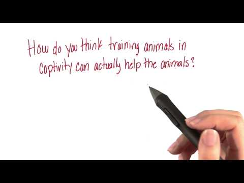 Captive animals - Intro to Psychology thumbnail