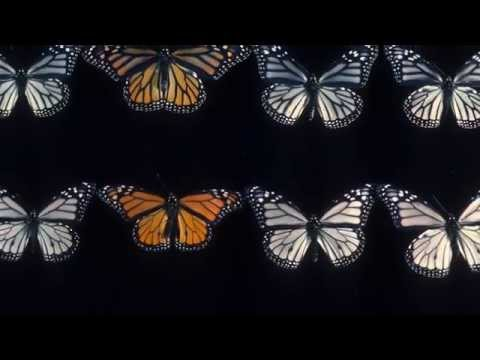 Science Today: Monarch Colors | California Academy of Sciences thumbnail