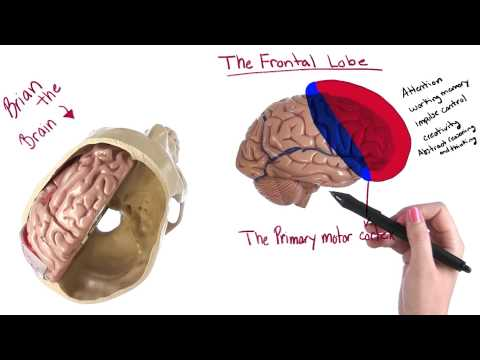 Structure of the brain - Intro to Psychology thumbnail