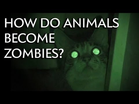 How Do Animals Become Zombies? - Instant Egghead #26 thumbnail