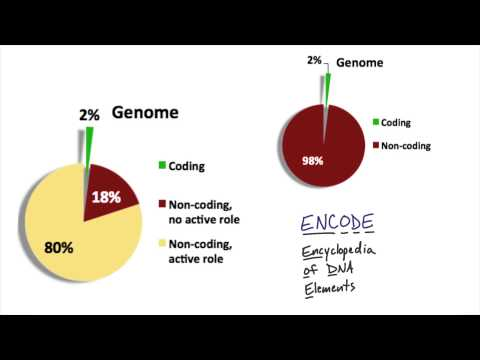 Genomic Composition thumbnail