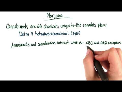 Marijuana mechanism thumbnail