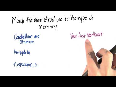 Brain structure and type of memory - Intro to Psychology thumbnail