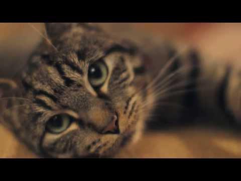 Pour les chats : un guide pour prendre soin de votre humain thumbnail